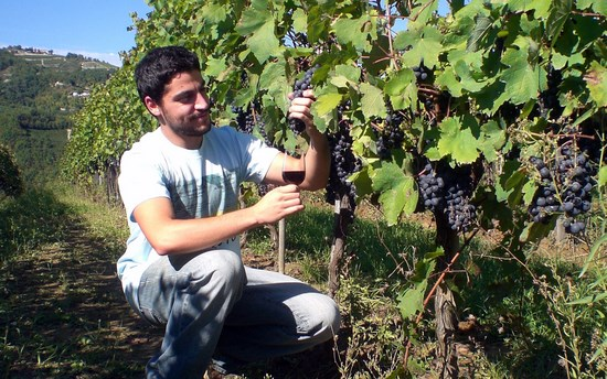 Making wine from Barbera grapes at Tenuta Antica, Cessole