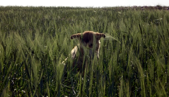 Dog in tall grass outside rest area in west Jordan